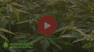 medical-marijuana-video
