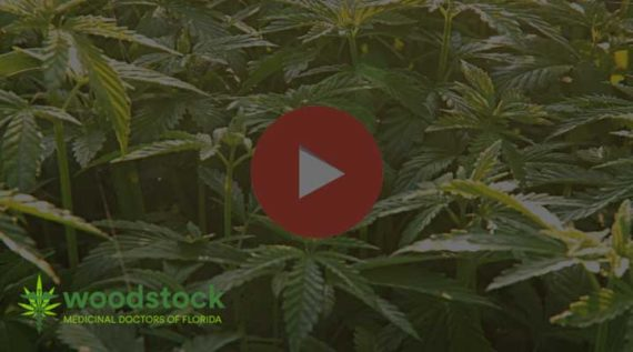 medical-marijuana-video
