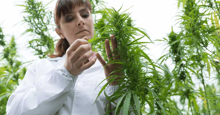 marijuana doctor in Orlando FL